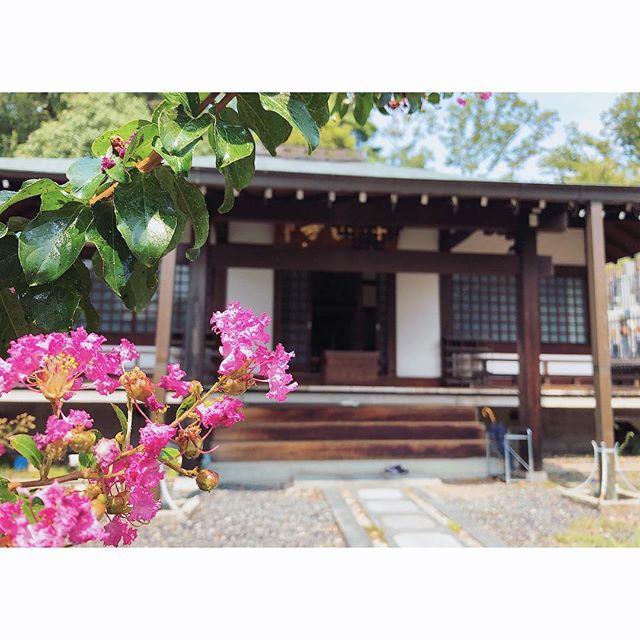 趣味の域を超えて今日は茨木市にある深敬寺で行われている仏像彫刻教室「無名塾」にお邪魔させて頂きました。皆さん思い思いの仏像を持って教室に来られ、長く続けられている方だと20年は通っておられるのです!純粋に好きで長年に渡って続けられている生徒さんの方が勉強熱心で詳しいのではないかと思うほどに。皆さんまた暑い中我が子のように大事に抱えて帰られて行きました。お疲れ様でした。#仏像彫刻教室#無名塾#深敬寺#百日紅#一隅を照らす#照terasu @sa10ca.k http://terasu-seiho.com/#彫刻#sculpture#日本画#japanesepainting#截金#kirikane#cutgoldleafing#伝統#traditional#仏教美術#buddhistart#family#japan#japanesestories#art_we_inspire#芸術#美術